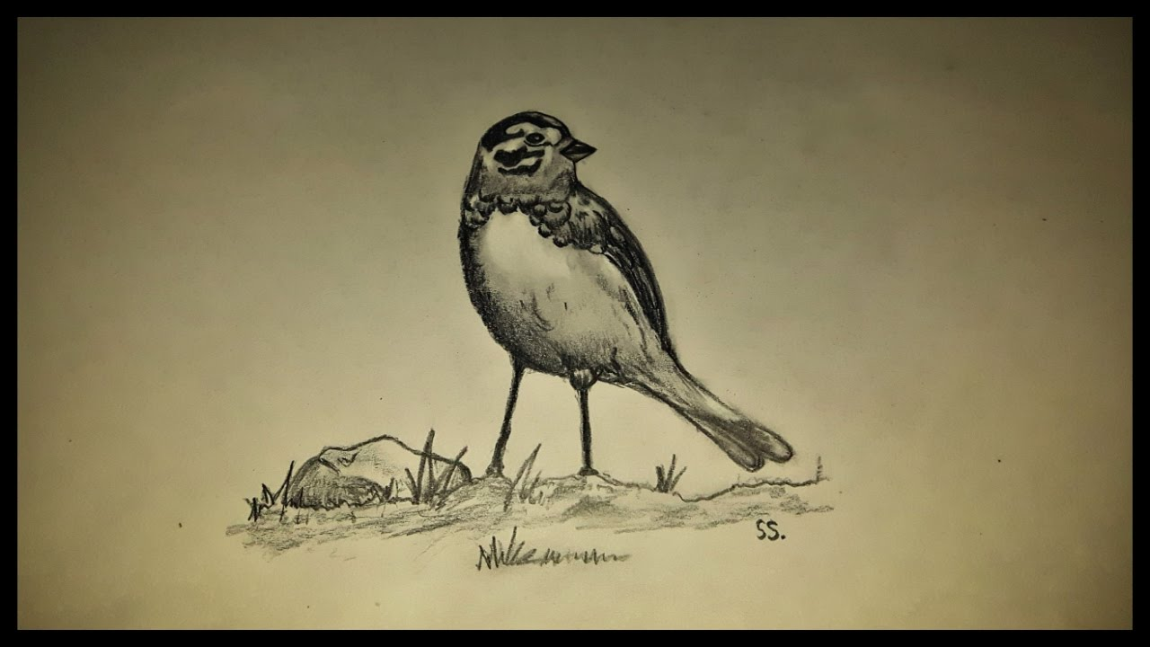 Draw a bird pencil shading anyone can draw