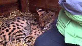 Will's Wild Animal Encounters at Hoo Farm - 1/11/2015 40