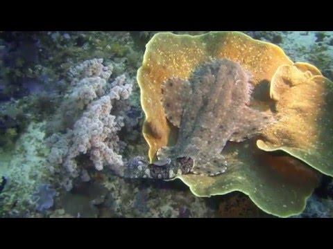 Diving in Raja Ampat Dampier Strait