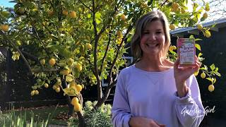 Garden Girl - Lemon Tree, Very Pretty! Except When ...