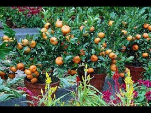 Casa Fruit