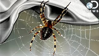 Is Spider Silk The Next Bulletproof Material?