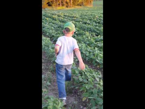 Non GMO Soybean Crop