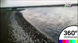Тонны мёртвой рыбы обнаружили в Турции на берегу реки Аси