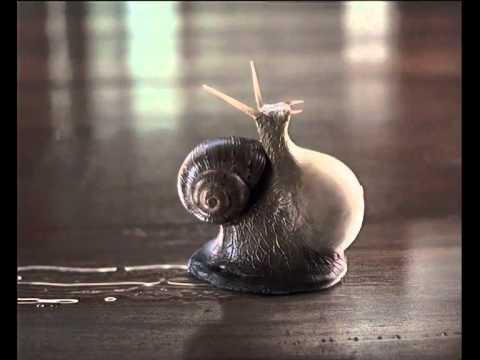 16shera Floor Plank Pregnant Snail 45 Youtube
