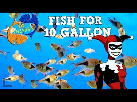 Best Fish For A 10 Gallon Aquarium