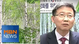 [경북] 영양 자작나무 숲, 관광명소로 개발…20m 넘…