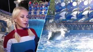 Вместе с дельфинами   `У дельфина тренировка проходит в виде игры`, — Лера Кудрявцева о шоу `Вместе