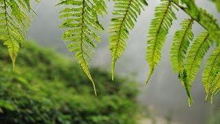 Hakgala Botanical Garden | Go Places Sri Lanka