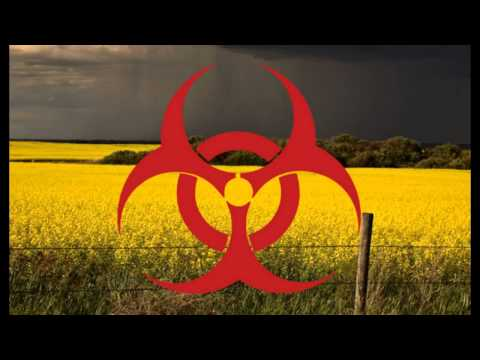 Alert! Monsanto's GM Plants Contaminate Europe Despite Ban!