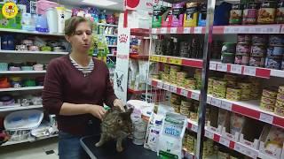 Если кошка отказывается от лечебного корма