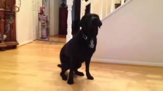 Teton Salutes -- Independent Therapy Dog