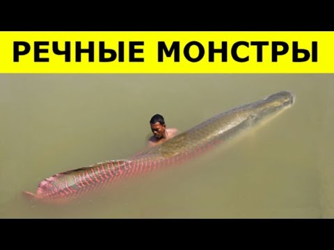 Увидев ЭТИХ МОНСТРОВ,