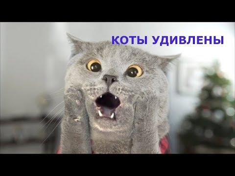 Удивленные коты, приколы с котами, подборка смешных котов, которые очень удивлены