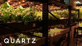 Gambar cover The farm in a New York City basement