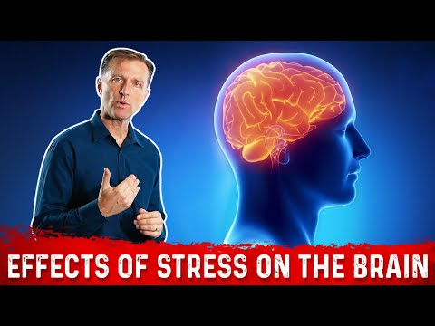 Effects of Stress on the Brain