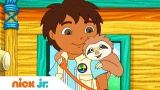 Гоу, Диего, Гоу!   Ленивцы в беде   Nickelodeon