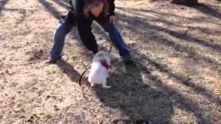 Pomeranian Rescue Part 2