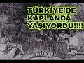 Türkiye'de Kaplan Yaşıyordu...Nasıl Soyları Tükendi?