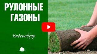 Рулонный газон ✅ Стоит ли укладывать в саду?(, 2017-04-24T10:38:28.000Z)