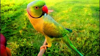 Gambar cover Most Amazing Video: Funny Parrot Talking Like Human | 2017