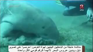 """شاهد.. ظهور """"عروس البحر"""" الحقيقية بشواطئ مصر"""