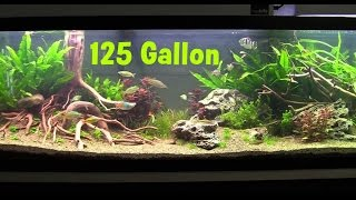 125 gallon freshwater planted aquarium packed with fish