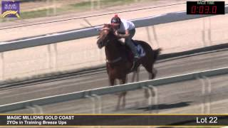 Lot 22 - 2YOs in Training Breezeup Thumbnail