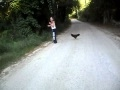 Girl Chased By Rooster