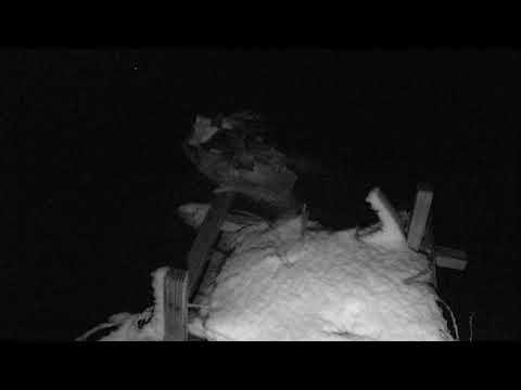 Osprey Nest - Chesapeake Conservancy Cam 03-21-2018 18:50:26 - 19:50:26