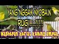 Pancingan Kecial Kuning Lombok Part  Mp3 - Mp4 Download