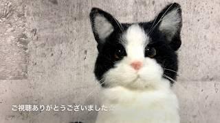 羊毛フェルトで作るリアル白黒猫八割れ猫の作り方