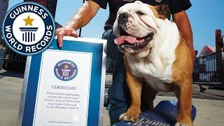 Farewell to Tillman, former fastest dog on a skateboard - Guinness World Records