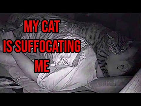 Kevin Campbell - Man Sets Up Camera To Find Out His Cat Sleeps On His Face At Night
