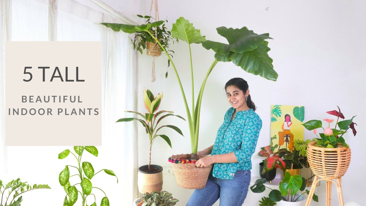 5 Tall & Beautiful Indoor Plants You can Grow this Season