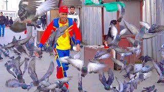 عمو صابر والحمام - Amo Saber and the pigeons