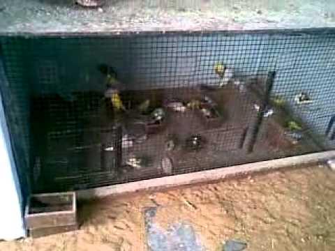Fancy Fish Tanks african birds of poorna arts & fancy fish aquarium,sriharipuram
