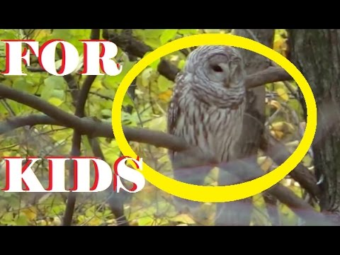 FOR KIDS: CUTE LITTLE BIRDS - Kids Can't Resist (2 Hours- 100's of Birds )