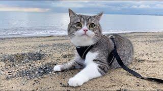 初めて海を散歩したら開放感で猫がとんでもないことになったw