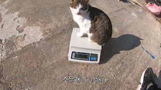 고양이들의 몸무게를 측정해보았다 thumbnail