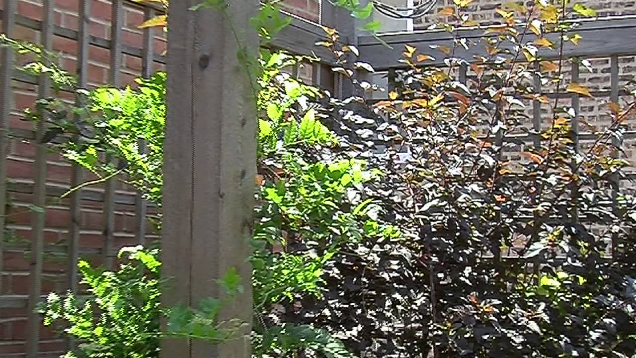 Frugal Landscaping for Back Yard Privacy : Landscaping Ideas - YouTube