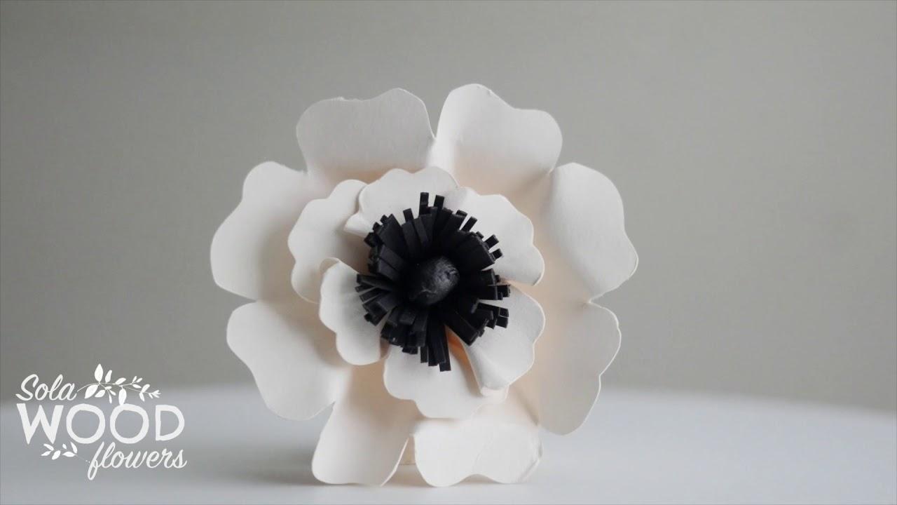 Oh My Poppy Flower White Youtube