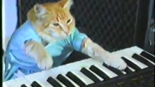 Keyboard Cat 2 Hour Edition!