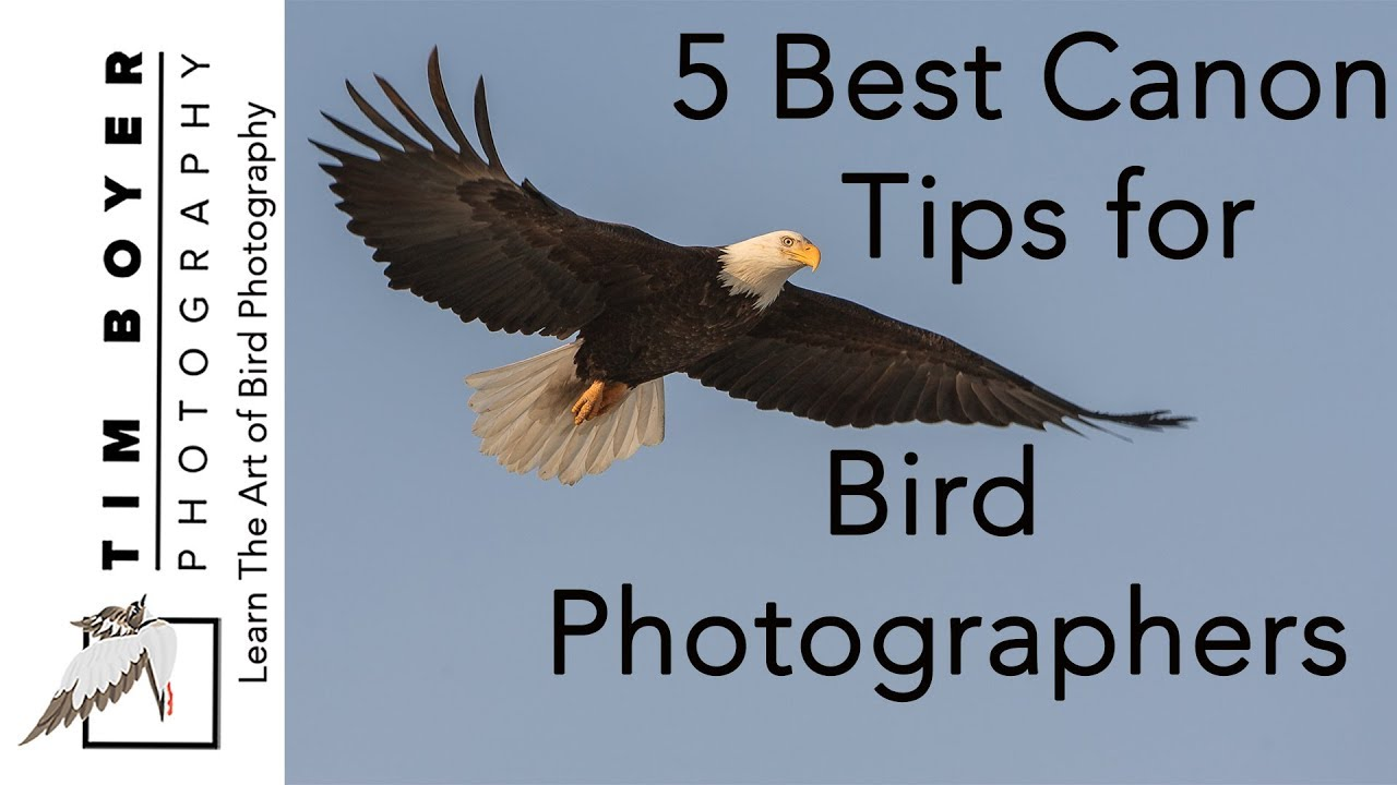 5 Best Canon Tips For Bird Photographers [2018]