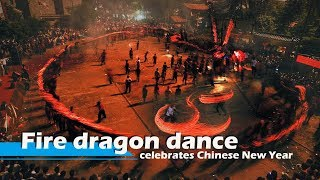 Live: Fire dragon dance celebrates Chinese New Year陈山火龙贺新春