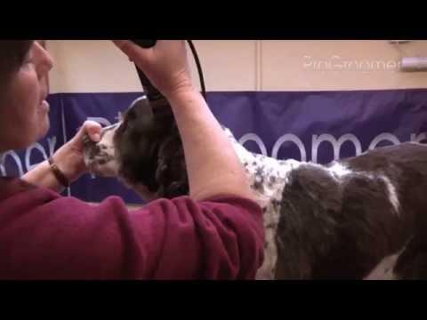 Grooming Guide - English Springer Spaniel - Pet/Salon - ProGroomer