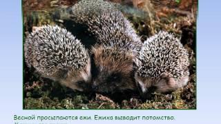 дикие животные  весной ЛОГОПРЕЗЕНТАЦИЯ Савченко ТО