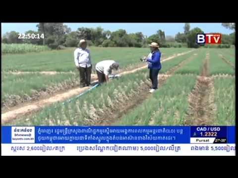 Khmer Agriculture - Garlic Farming in Cambodia - Farmer Models of Garlic Farming