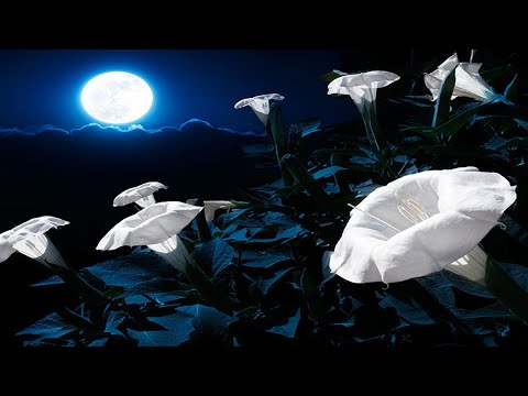 Moonflower by Santana - YouTube
