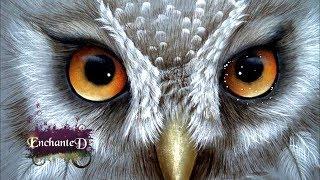 Simbolismo Del Búho ¿Qué Significa Cuando Ves Uno?  Amuleto,  Superstición, Sueños ,Tòtem y Tatuajes